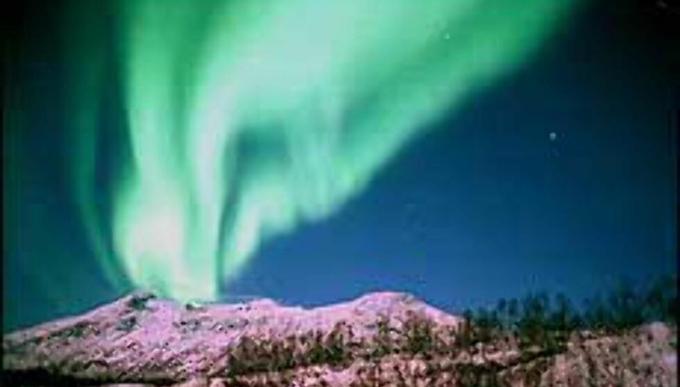 Nordlysfestival og mulighetene til å se ekte nordlys er en av grunnene som oppgis for hvorfor reise til Tromsø nå. Foto: Destinasjon Tromsø Foto: Destinasjon Tromsø
