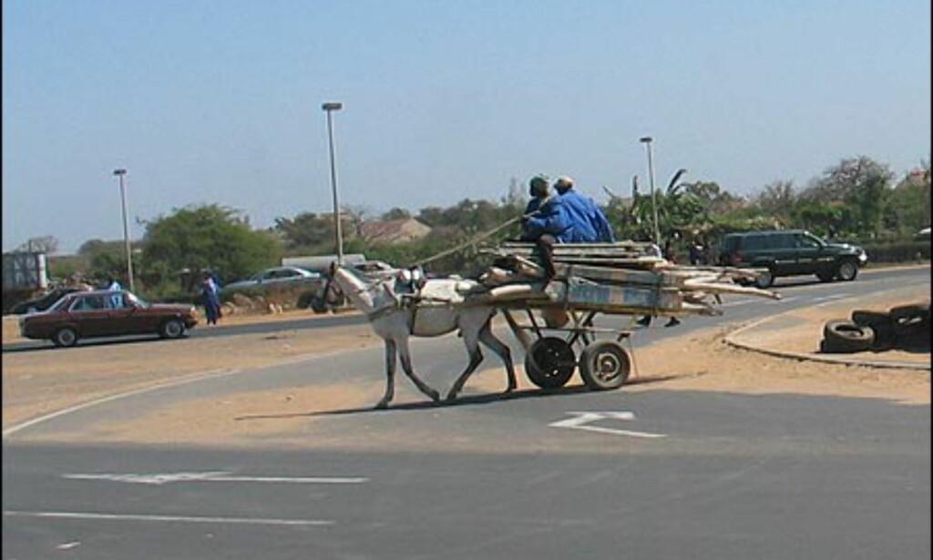 Dakar preges av tung biltrafikk, men fortsatt brukes hest og kjerre til transport av varer.