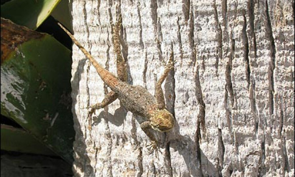Det er fullt mulig å reise på safari i Sør-Senegal. Men du trenger ikke forlate Dakar for å bli kjent med landets gekko-bestand.