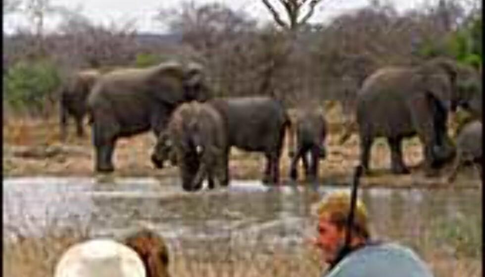 Safari til fots kan by på nærkontakt av tredje grad. Bilde fra Transfrontiers Foto: Transfrontiers