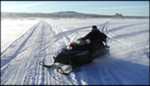 Hestekrefter i snøen