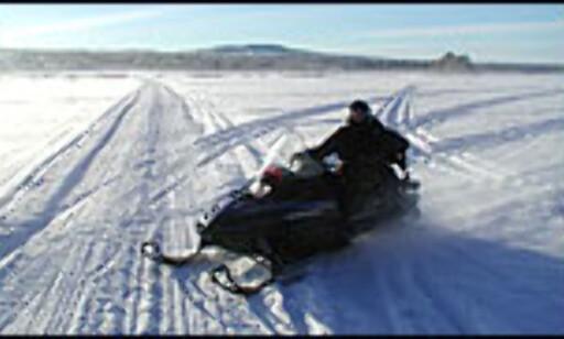image: Hestekrefter i snøen
