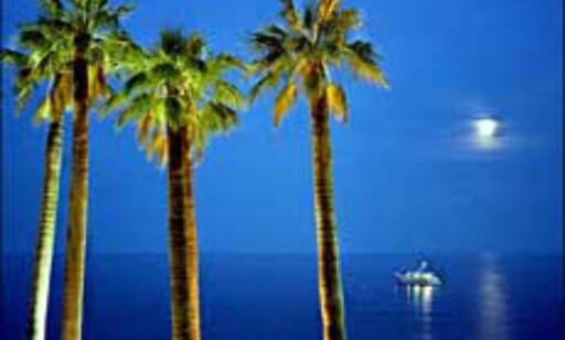 Palmesus og strandliv i juleferien? Fortsatt mulig! Illustrasjonsbilde: Åse Gustavsen Foto: Åse Gustavsen
