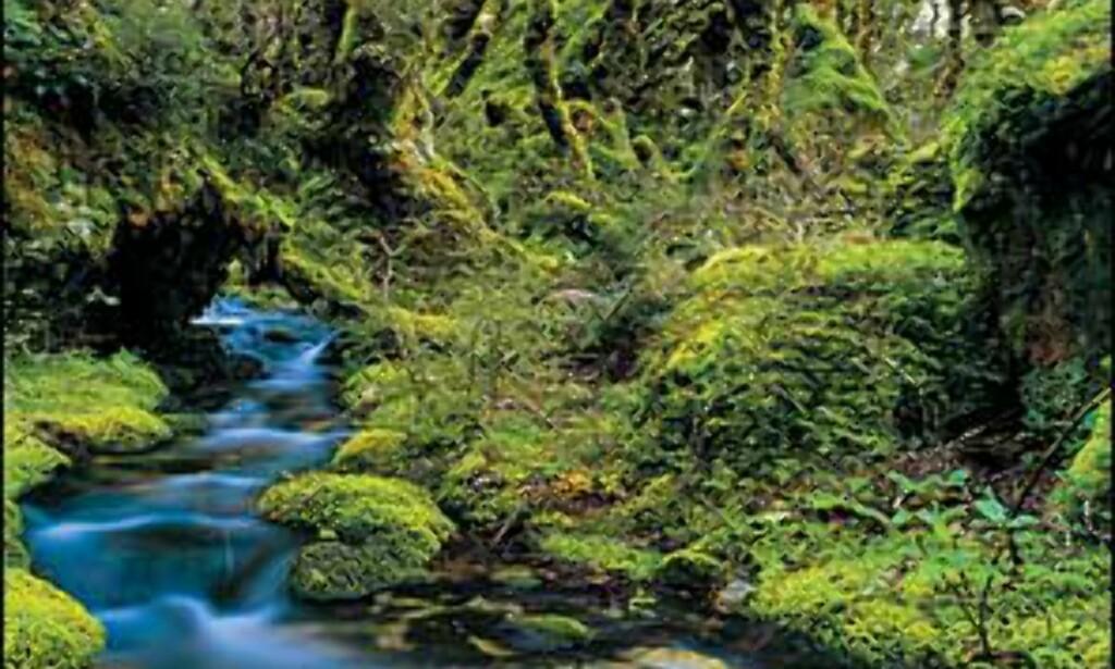 Bilde: Gilbert van Reenen/Tourism New Zealand Foto: Gilbert van Reenen/Tourism New Zealand