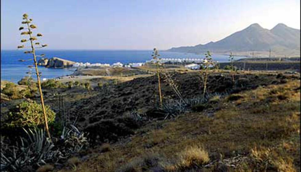 Planten i forgrunnen, La Pinaca, vokser overalt og har blitt selve symbolet på Cabo de Gata. I bakgrunnen skimtes La Isleta del Moro. Foto: www.photito.com/ Spencer Montero