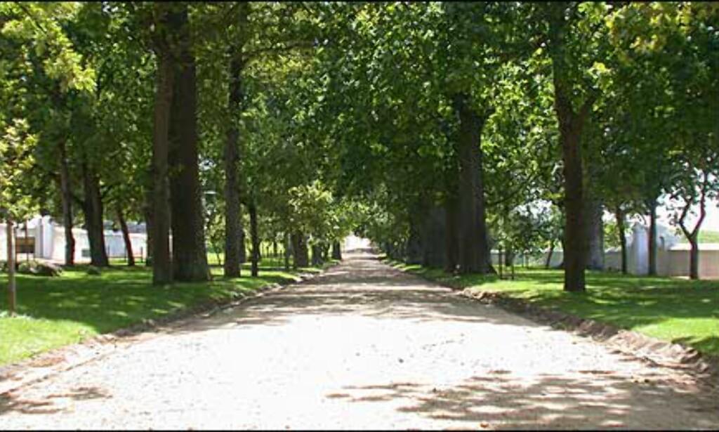 Bevis på tidligere tiders rikdom - alleen mellom vinmarkene fører til Groot Constantia. Stedet er nå drevet av en stiftelse.