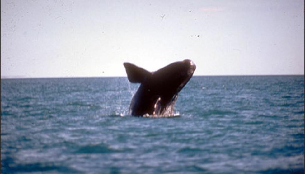 Foto: secretaria de turismo de Argentina