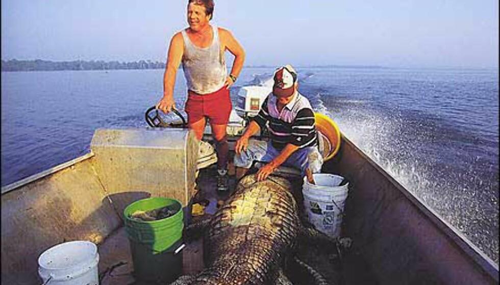 Stolte jegere i Louisana med alligator på over 400 kilo i båten. Gjengitt med tillatelse fra Orion forlag.