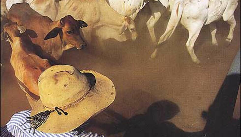 Australske cowboyer bruker også cowboyhatt. Faksimile fra boka. Gjengitt med tillatelse fra Orion forlag.