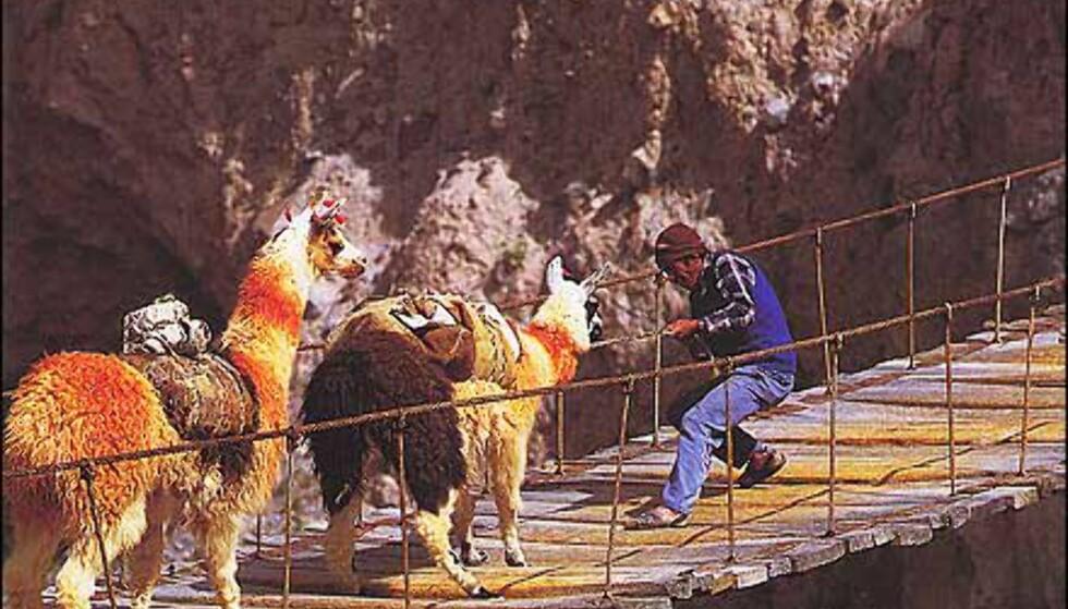 I Peru er det ikke nøvendigvis esler som er sta, men lamaer. Faksimile fra boka. Gjengitt med tillatelse fra Orion forlag.