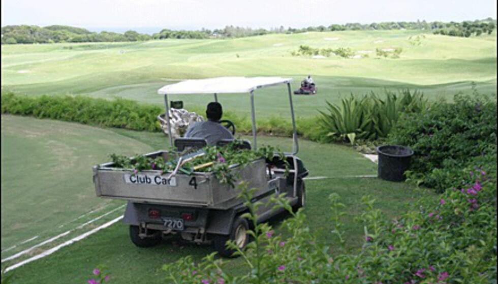 En stor stab jobber med å holde golfbanene i god stand.