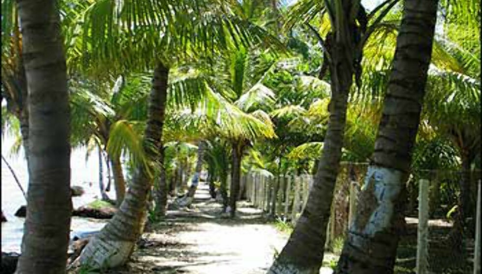 Palmesus. Foto: Lene Heiberg