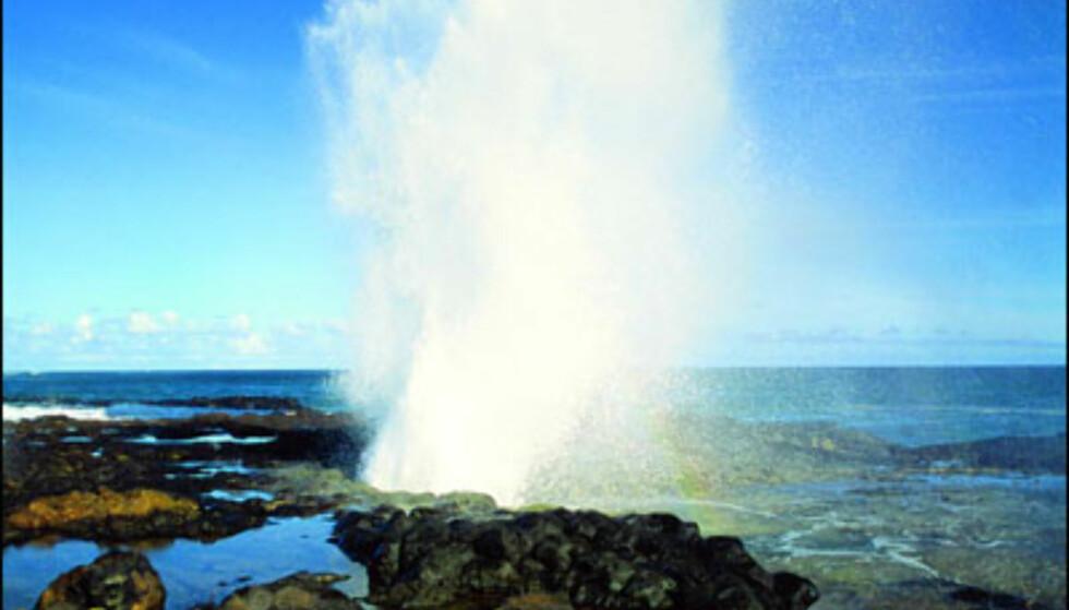 Kauai, Spouting Horn. Foto: HVCB/Ron Dahlquist Foto: HVCB/Ron Dahlquist