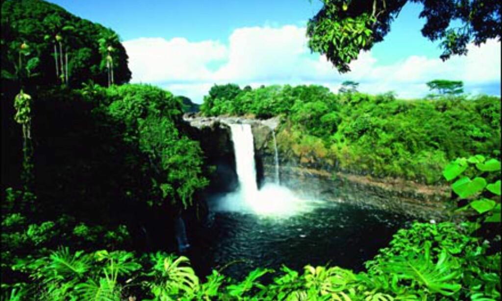 Rainbow Falls, Hawaii. Foto: HVCB/Kirk Lee Aeder Foto: HVCB/Kirk Lee Aeder