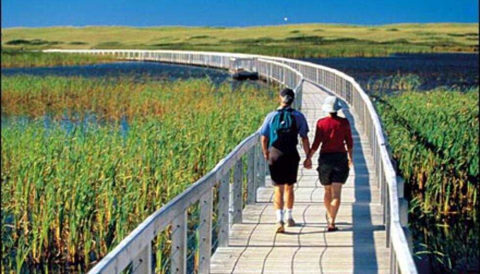 Turstier for hyggelige rusleturer i Greenwich National Park, Prince Edward Island. Foto: Tourism PEI/John Sylvester Foto: Tourism PEI/John Sylvester
