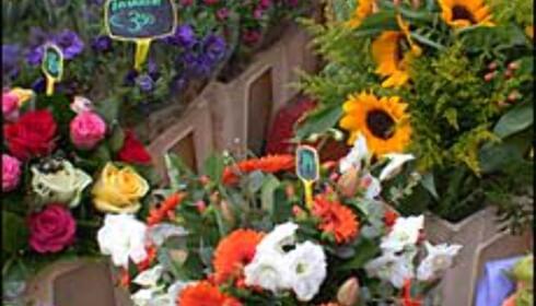 Amsterdam flyter av blomster ...