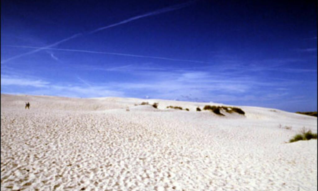 Råbjerg Mile er Danmarks største vandre-sanddyne. Den er rundt to kvadratkilometer stor og flytter seg opp til 15 meter årlig. Foto: Kristin Sørdal