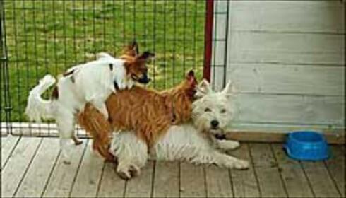 - Mine hunder er litt rare, sier fotografen Christer Tempelen om dette bildet.  Foto: Christer Tempelen