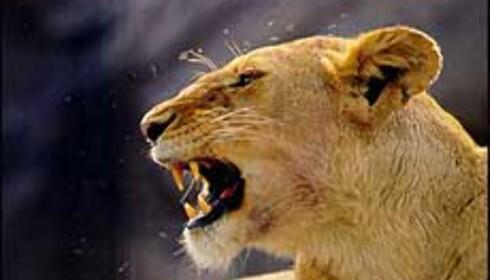 Reiseorakelet drømmer om safari i Tanzania.