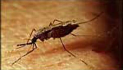 Malaria smitter ved myggstikk, og vern krever både tekstiler og dyre medisiner.