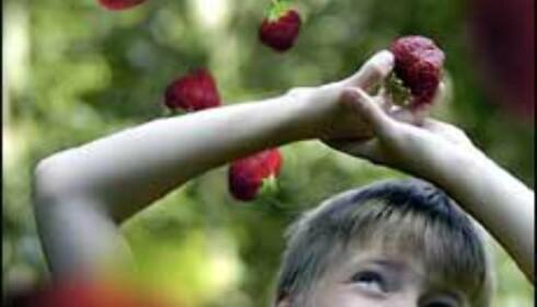 Jordbær fra himmelen. Foto: John E. Githmark Foto: John E. Githmark