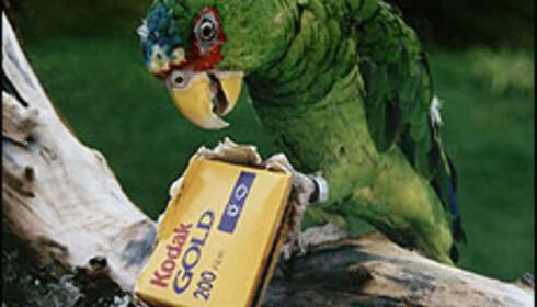 Nina Johnsen, gammel traver i DinSides fotokonkurranse, har foreviget papegøyen sin. Foto: Nina Johnsen