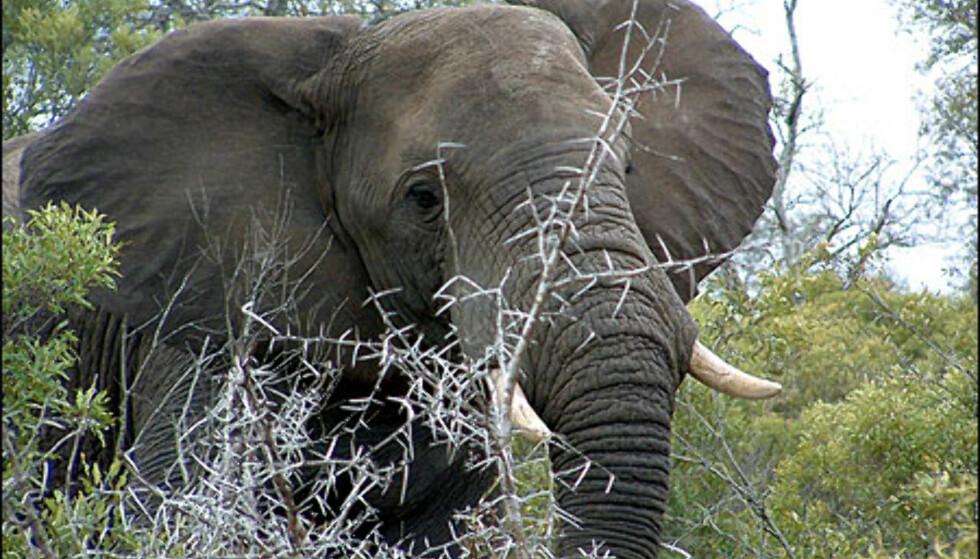 Elefanter på trappen, det er Gry Gaards hverdag. Foto: Gry Gaards