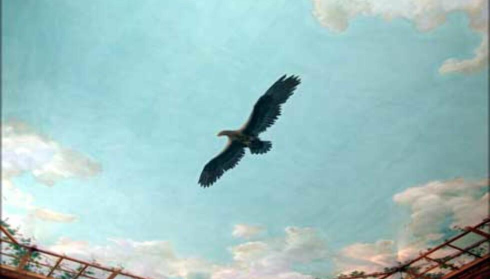 FUGLEVÆRELSET: Ørnen i taket er faktisk ingen kongeørn, men en fiskeørn.