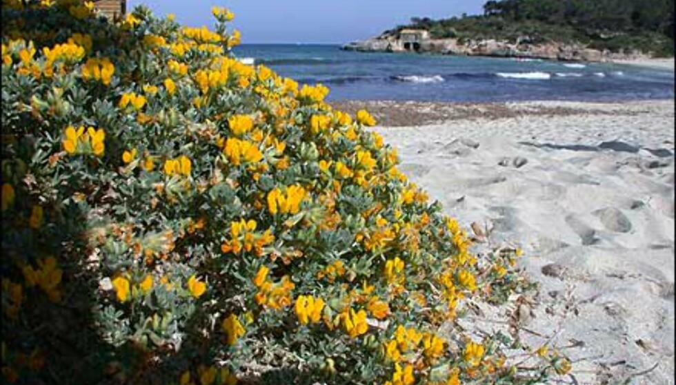 Mondragó ble gjort om til naturreservat i 1992. Parken dekker et område på 785 hektar, og her er både strender, klippekyst, sanddyner, laguner, pinjeskog og små dammer. Her ser vi stranden S'Amarador.