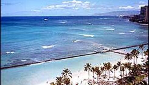 Waikiki - verdens beste mener testeren som har jagt kloden rundt for å vurdere 20 mer eller mindre kjente strender.