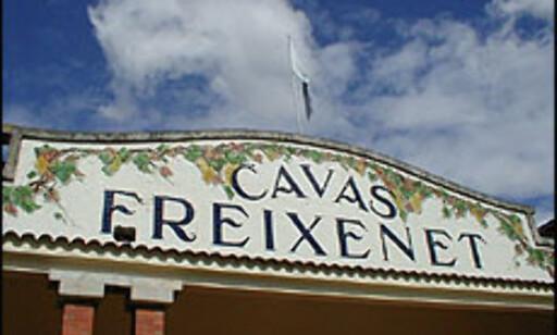 Freixenet er Spanias største cavaeksportør. Foto: Inga Ragnhild Holst Foto: Inga Ragnhild Holst