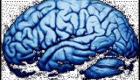 Har du høy eller lav IQ?