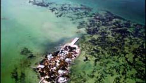 Klare forhold ved Belize. Foto: Janecke Elton Foto: Janecke Elton