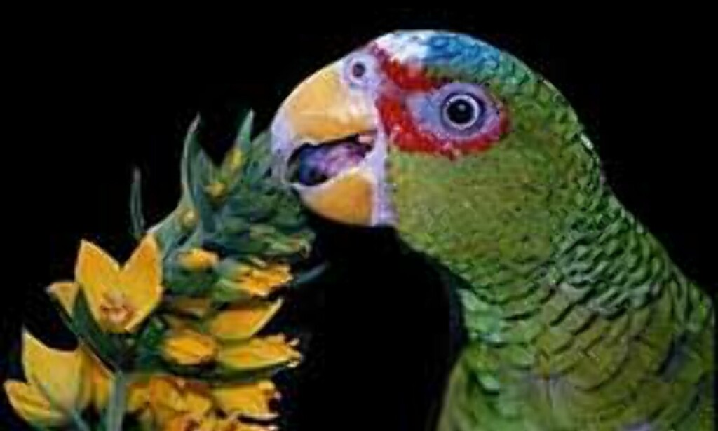 Blomsterflørtende papegøye. <I>Illustrasjonsfoto: Nina Johnsen</I> Foto: Nina Johnsen