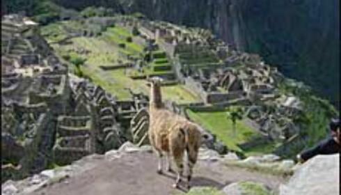 Machu Picchu i Peru.<br /> <I>Foto: Paul Jacob Hansen</I>