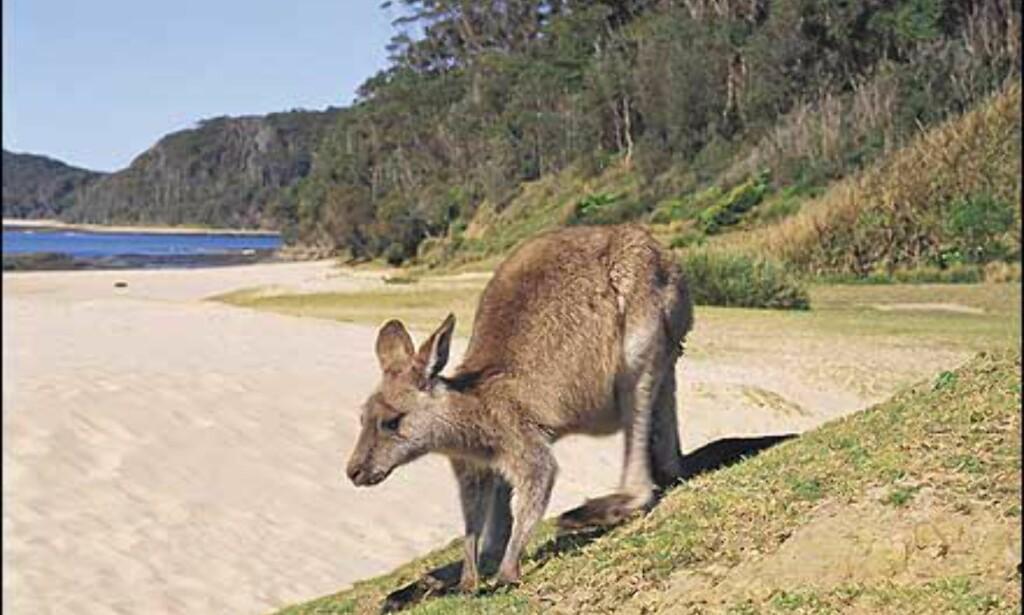 Foto: Courtesy Tourism New South Wales Foto: Courtesy Tourism New South Wales