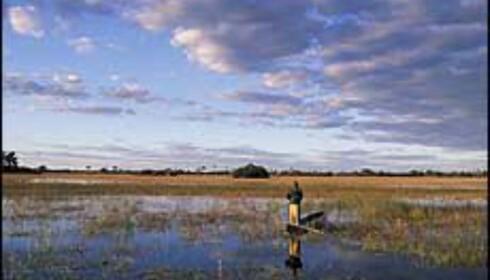 Botswanas Okavango-delta lokker med flotte naturopplevelser og mindre turisme enn lenger mot nord og øst. <I>Foto: Sigurd Safari</I> Foto: Sigurd Safari