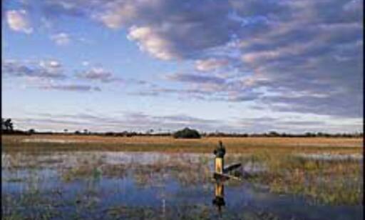 Botswanas Okavango-delta lokker med flotte naturopplevelser og mindre turisme enn lenger mot nord og øst. Foto: Sigurd Safari Foto: Sigurd Safari