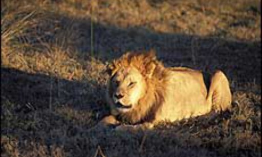 image: Finn din safaridrøm