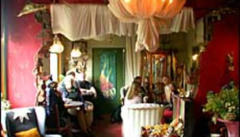 Hjemmehygge, hekser og trollerier på det magiske hotellet <I>De Tovenaarsberg</I>.