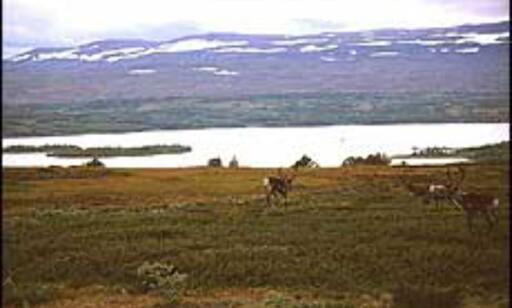 Jegere skal være mindre deprimerte om høsten enn den øvrige befolkningen. Kom deg ut på tur. Foto: Jorgetutor.com