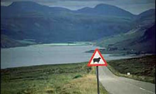 Opplev det skotske høyland. Foto: Jorge Tutor
