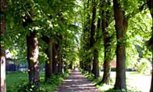Gå tur under skyggefulle trær. Bilde fra Bjølsenparken.