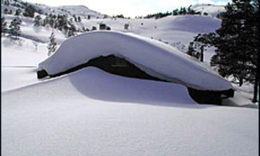 Vinterstemning uten action - nedsnødd hytte. Foto: Lars Brubæk Foto: Lars Brubæk