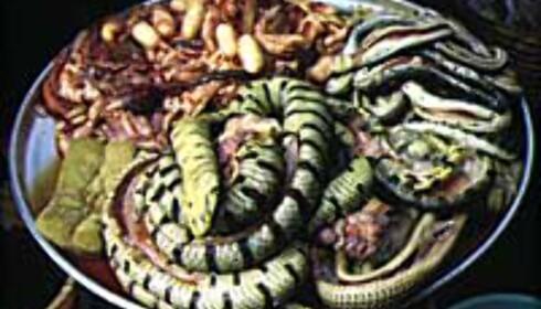 Frister det med et slangemåltid?<br /> Foto: Kirsti van Hoegee Foto: kirsti van hoege