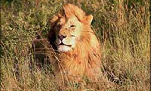 Safari er bare en liten bit av Kenya. Kenya er med sine nærmere 600.000 kvadratkilomter nesten dobbelt så stort som Norge. Fotograf Haakon Stenersen har i bildeserien fra Kenya, satt fokus på folk og storslåtte landskaper - fjell, stepper, savanner og hav. Foto: Haakon Stenersen