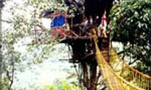 I tretoppene i India.