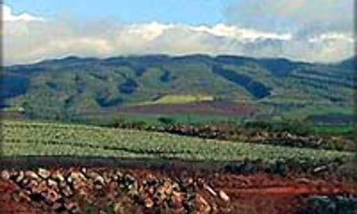 Maui har både halvørken og regnskog.