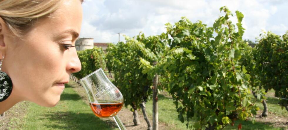 DinSide har tatt turen til Cognac for å finne ut mer om nordmenns yndlingsbrennevin. Foto: Astrid Mannion