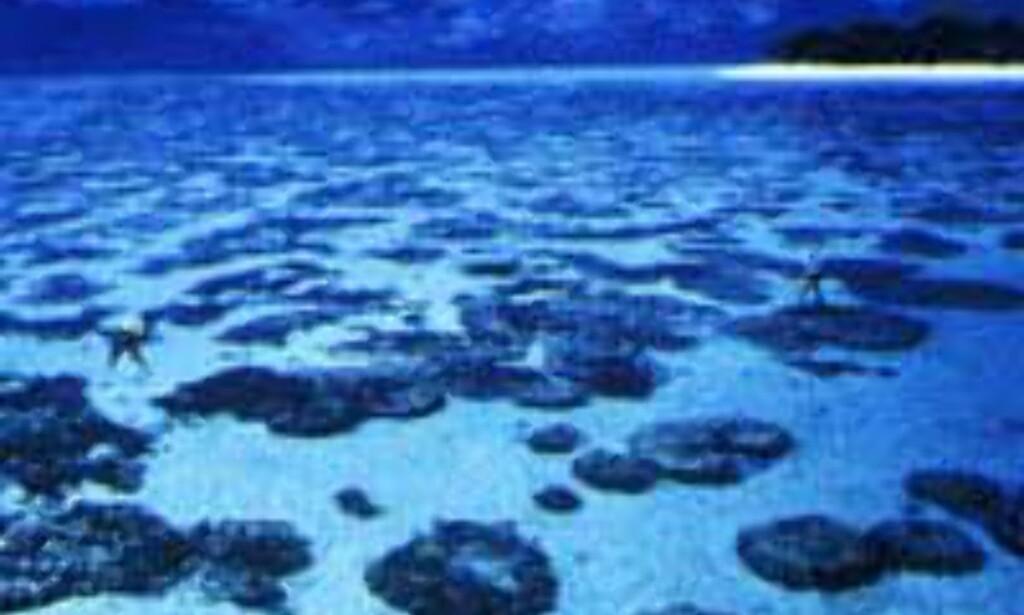 Koraller så langt øyet kan strekke seg...